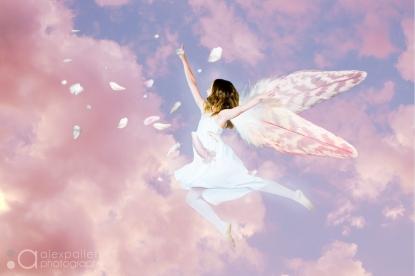Masyn fairybird